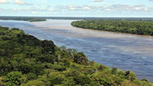 Dia da Amazônia e a luta pela preservação da maior floresta tropical do mundo
