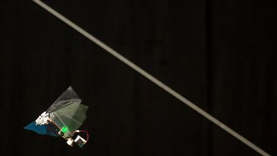 Pesquisadores criam moscas-robô que batem asas e fazem movimentos acrobáticos