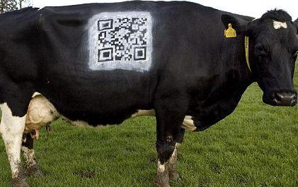 QR Code vaca