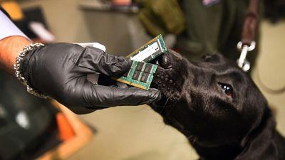 Polícia dos EUA treina cães para farejarem dispositivos eletrônicos