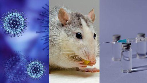 Giro da Saúde: Moderna aprovada; predisposição à COVID-19; vacina contra câncer