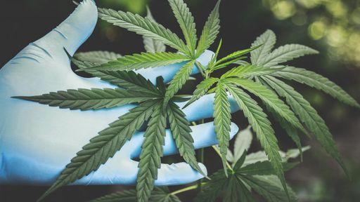 Medicina do Futuro: fizemos o teste genético da Proprium, que mira em cannabis
