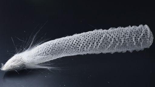 Conheça a esponja-do-mar que promete revolucionar a construção de arranha-céus