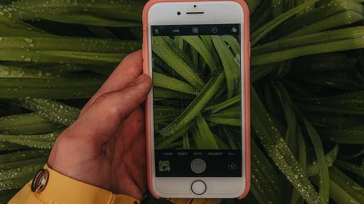 4 apps para identificar plantas por fotos
