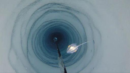 Formas misteriosas de vida são encontradas abaixo do gelo da Antártida