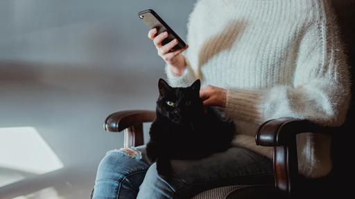 5 aplicativos para quem tem pet