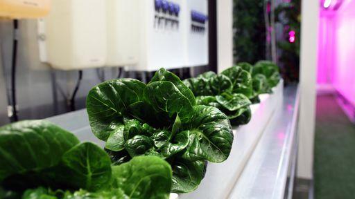 Irmão de Elon Musk lança programa de cultivo vertical de vegetais em contêineres
