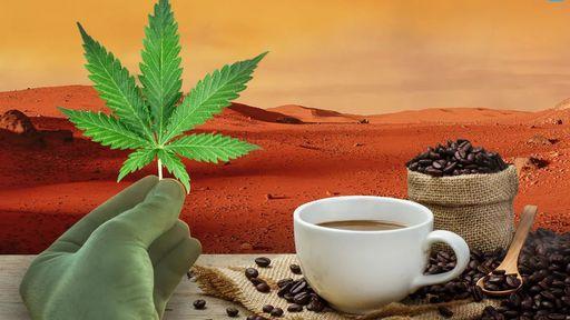 Cannabis e café serão enviados ao espaço; entenda o objetivo do experimento