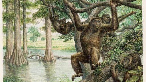 Descobertas novidades sobre a evolução humana em fóssil de 10 milhões de anos