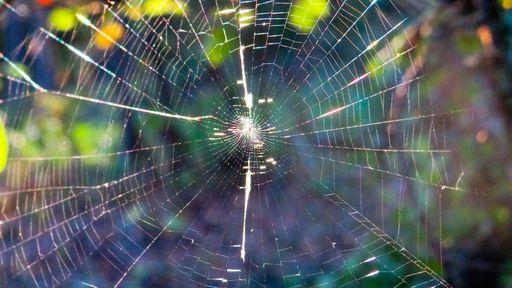 Este vídeo de aranha tecendo em time-lapse é tudo o que você precisa ver hoje