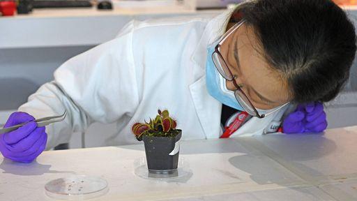 Será possível se comunicar com as plantas? Cientistas dizem que sim