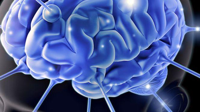 """033983a43 Cientistas criam """"miniaturas"""" de cérebros humanos em laboratório - Ciência"""