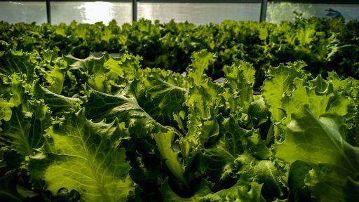 Projeto ajuda pequenos produtores rurais a implementar tecnologia nos negócios