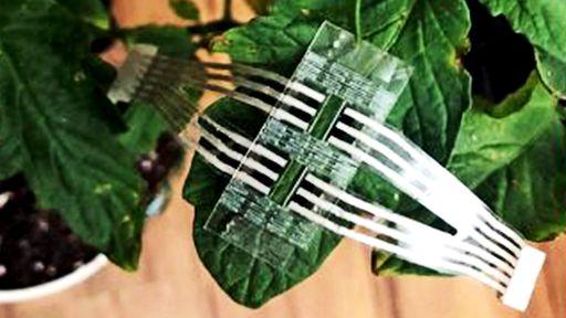 Adesivo permite saber como anda a saúde das plantas em tempo real