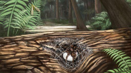 """Aranhas pré-históricas são encontradas presas em âmbar com filhotes """"nos braços"""""""