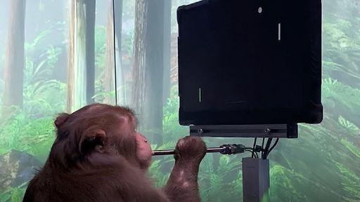 Macaco com implante cerebral usa a mente para jogar videogame