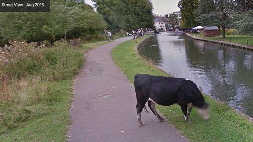 Privacidade é tudo: Google borra rosto de vaca no Maps