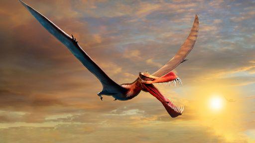 """Pterossauro descoberto na Austrália teria sido um """"dragão da vida real"""""""