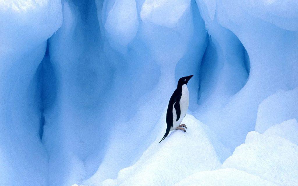 Linux - Pinguim