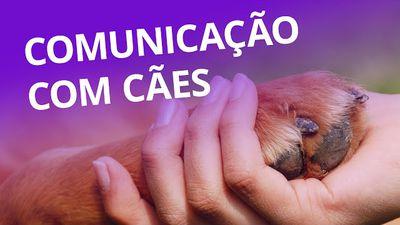 Comunicação evoluída com cachorros [CT Inovação]