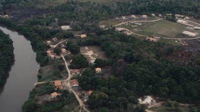 Google usa celulares antigos para monitorar desmatamento na Amazônia