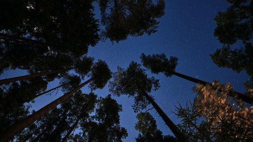 Temperatura noturna vem aumentando mais que a diurna, impactando o ecossistema