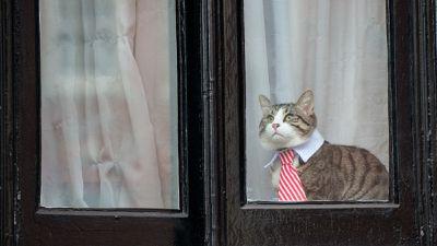 Julian Assange negligencia cuidados com seu gato na embaixada do Equador