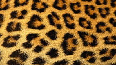 Instagram conscientiza usuários que pesquisarem por animais selvagens e exóticos