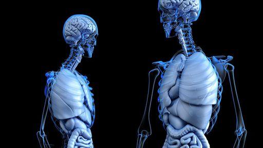 Nova técnica consegue transformar registros de raios-X em imagens 3D