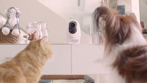 Acer vai lançar linha de acessórios para animais de estimação