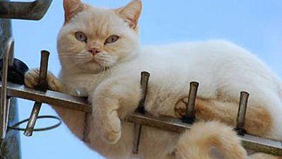 'Gato' e 'Gatonet': delitos tecnológicos e o déficit da legislação