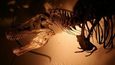Descoberta diz ter revelado os eventos exatos da extinção dos dinossauros