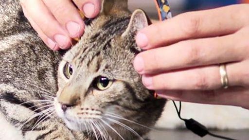 DJ e produtor Deadmau5 lança fones de ouvido para gatos que custam US$ 1 mil