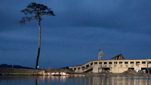 Campanha no Facebook tenta salvar a última árvore que sobreviveu ao tsunami