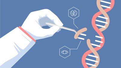 Cientistas descobrem regras simples que permitem edição precisa de genes humanos