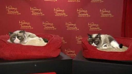 Grumpy Cat é homenageada com estátua de cera e participação na Broadway
