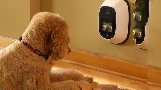 Coisas da tecnologia: seu cachorro já pode te ligar no meio do expediente