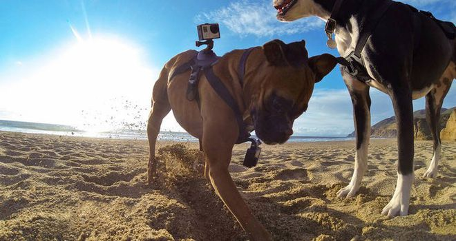 GoPro cão2