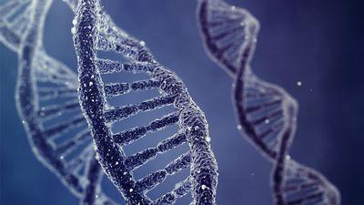 Cientistas encontram novas estruturas nas moléculas de DNA além da dupla hélice