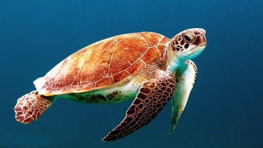 Aquecimento do oceano pode levar espécies marinhas à extinção em massa