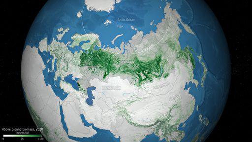 As florestas da Rússia têm armazenado mais carbono do que se pensava