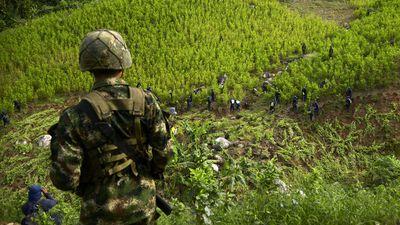 Colômbia testa drones de combate para destruir plantações de cocaína