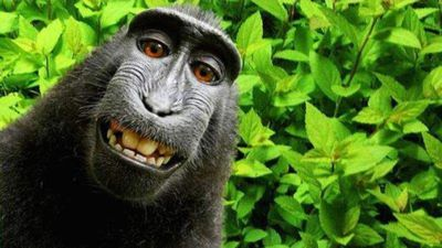 Disputa judicial envolvendo selfie do macaco Naruto finalmente chega ao fim