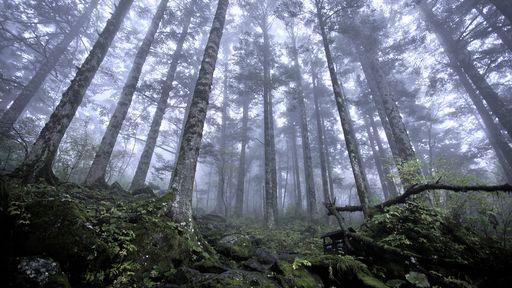 Estudo comprova a existência de uma 'internet das árvores'