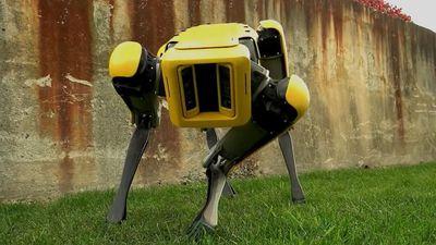 Boston Dynamics venderá seus cães-robôs a partir de 2019