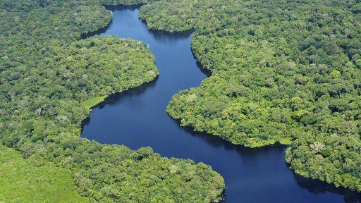 Mercado Livre participa de iniciativa para valorizar produtos da Amazônia