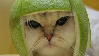 ONG usa virais de gatos do Youtube em campanha