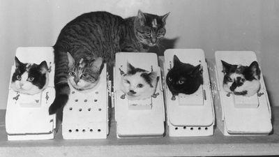 Félicette, a gatinha que viajou ao espaço em 1963, pode ganhar estátua na França