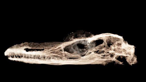 Estudo afirma que o menor dinossauro do mundo era um lagarto, na verdade