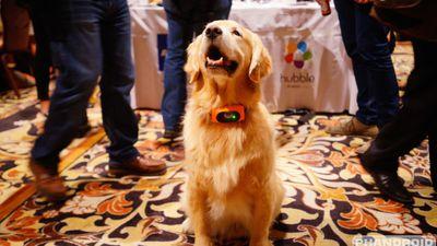 CES 2015: Motorola apresenta coleira inteligente para cães